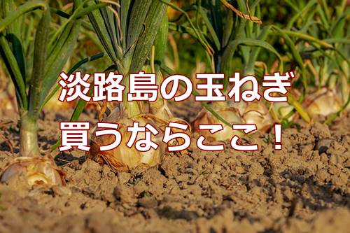 淡路島の新玉ねぎが甘いと評判!有機栽培と減農薬の安心さがおすすめ