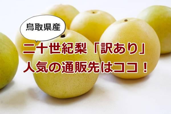 鳥取の二十世紀梨の通販「訳あり」のおすすめはココ!ジューシーで美味しいと人気ですよ。