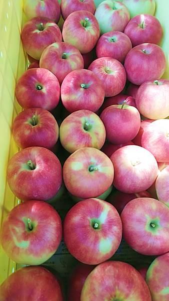 夏のりんご