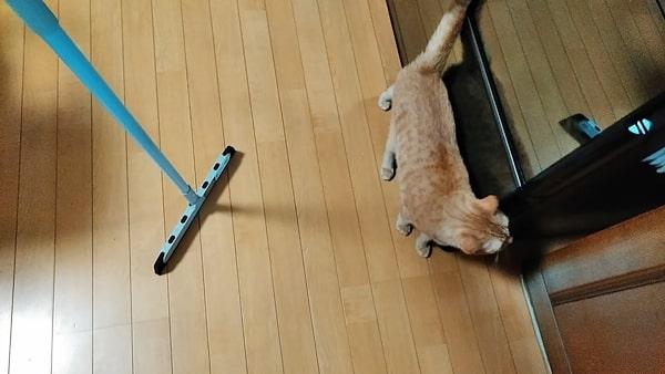 猫の毛掃除ラバーほうき